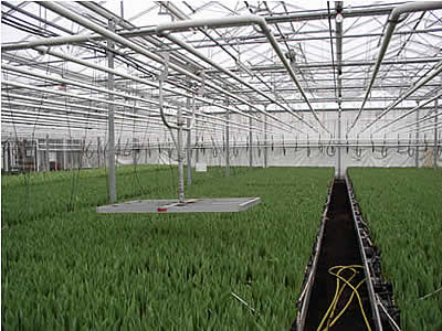 9. Greenhouse and interior
