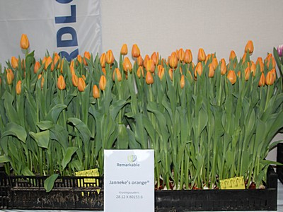 10. Economical aspects of forcing tulips