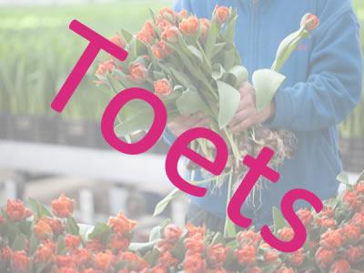 Eindtoets Broei van tulpen