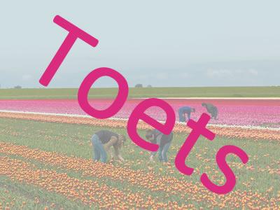 Eindtoets Teelt van tulpen