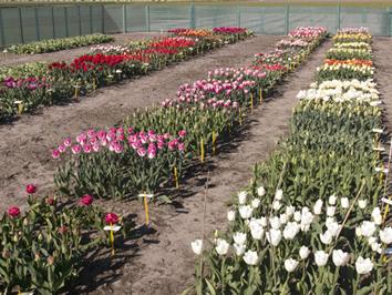 11. Cultivars benamen, beschermen en vermarkten
